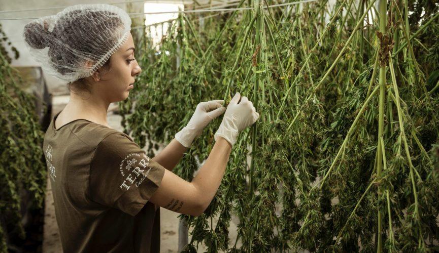Hvordan laver man cannabisolie